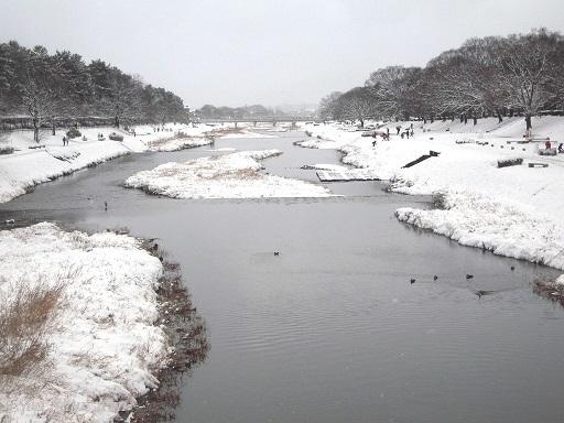 京都も雪  2017年1月15日_a0164068_15402425.jpg
