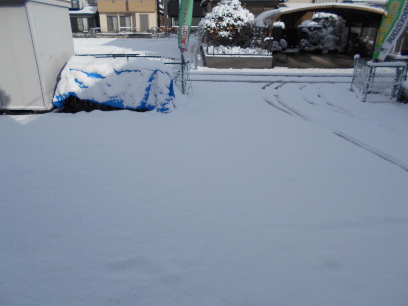雪降りましたねぇ_b0189682_9182284.jpg