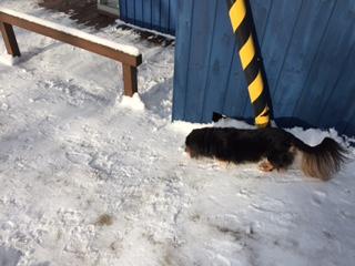 """やっぱり""""雪""""が好き。。。_b0186183_16313985.jpg"""