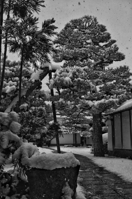 ★雪の京都_e0291683_10540033.jpg