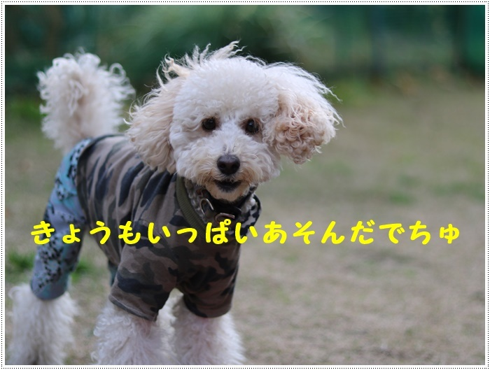 b0175688_01101513.jpg
