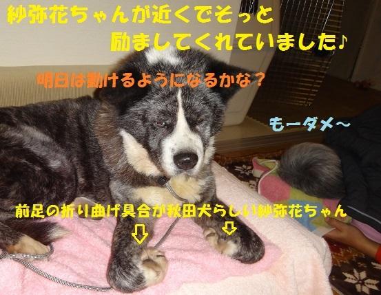 f0121712_00444463.jpg