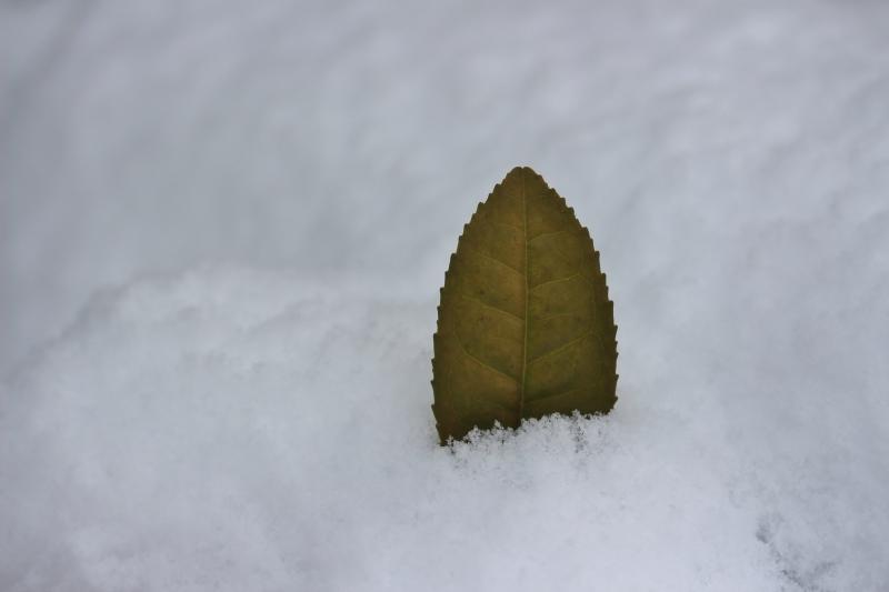 雪の朝_b0220318_08555771.jpg