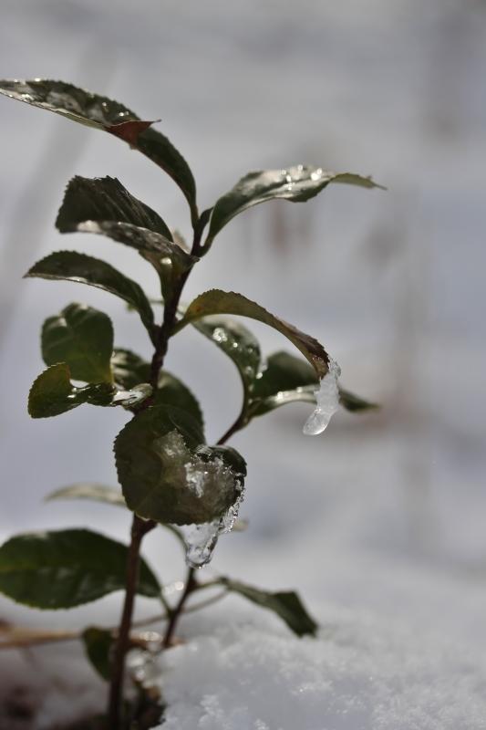 雪の朝_b0220318_08560821.jpg