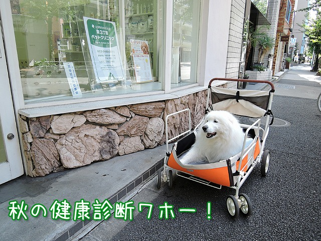 気軽に健康相談♪ 【PET'S ALL RIGHT】_c0062832_448478.jpg