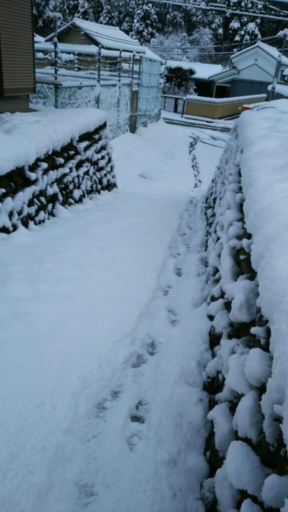 1/16 (月) 雪降ってます!_a0272042_12422338.jpg