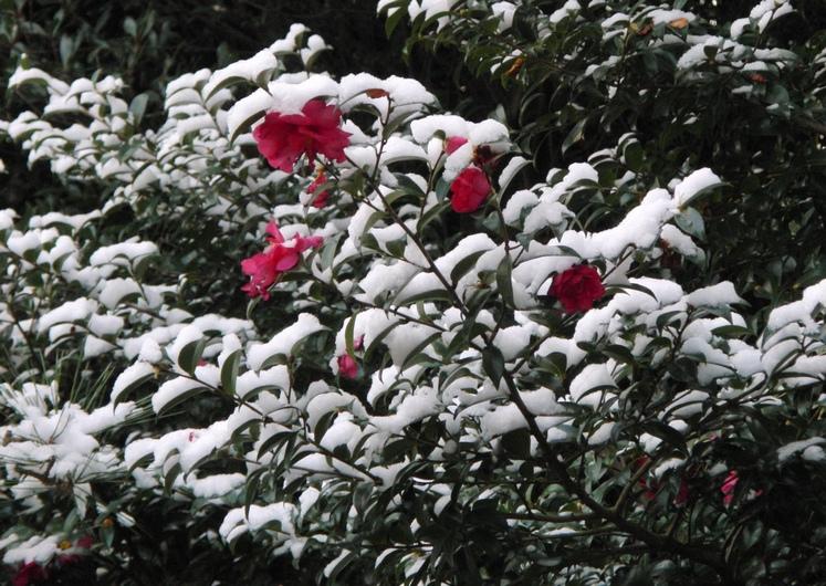 寒かった_c0065260_1954610.jpg