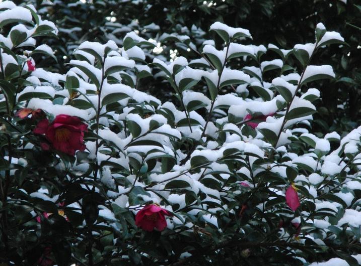 寒かった_c0065260_196579.jpg