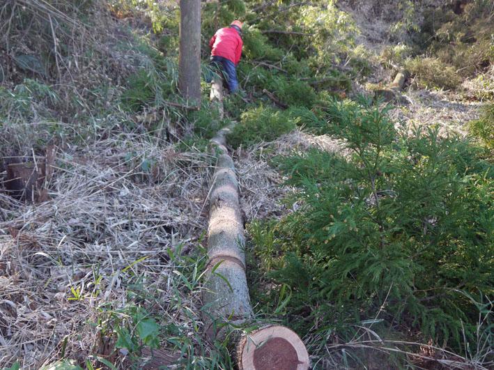 使い捨て和器用間伐材運び出し準備完了1・13六国見山臨時_c0014967_177992.jpg