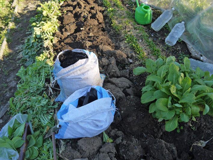 ジャガイモの種芋購入&植えるための土づくり1・16_c0014967_1816948.jpg