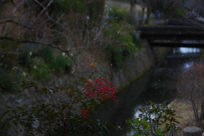 京都    1/14 雪なんかないやんの巻_f0021869_22444629.jpg