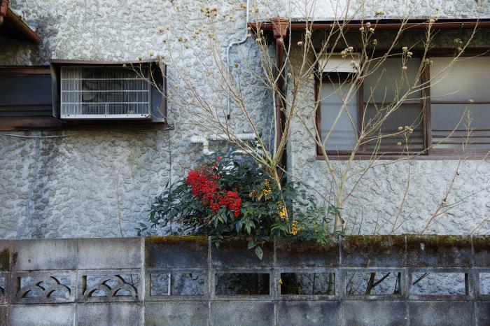 京都    1/14 雪なんかないやんの巻_f0021869_22454861.jpg