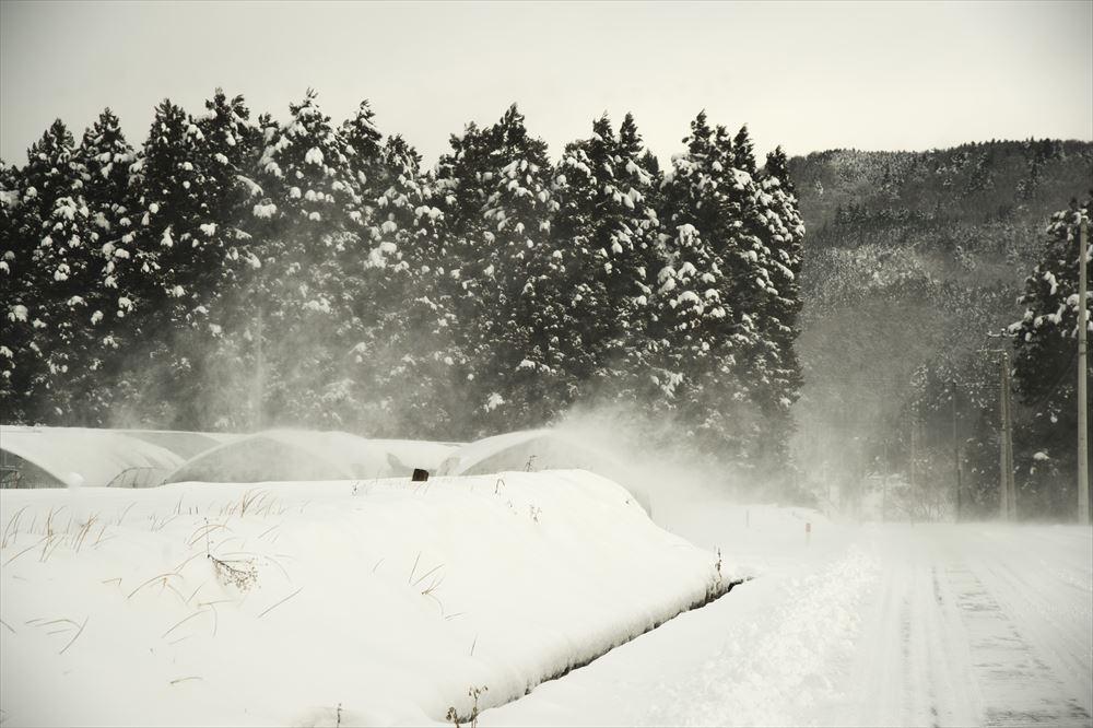 雪の舞う日_b0074098_22433979.jpg