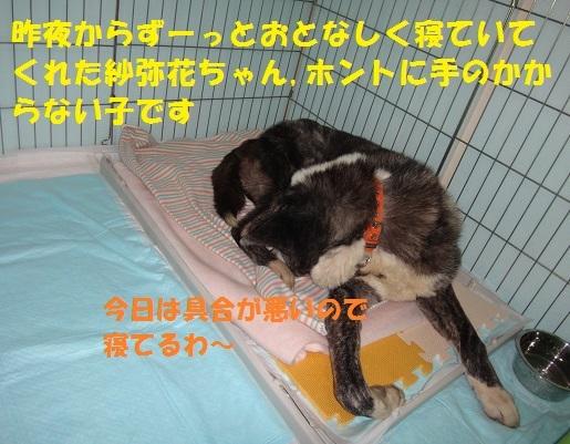f0121712_22291093.jpg