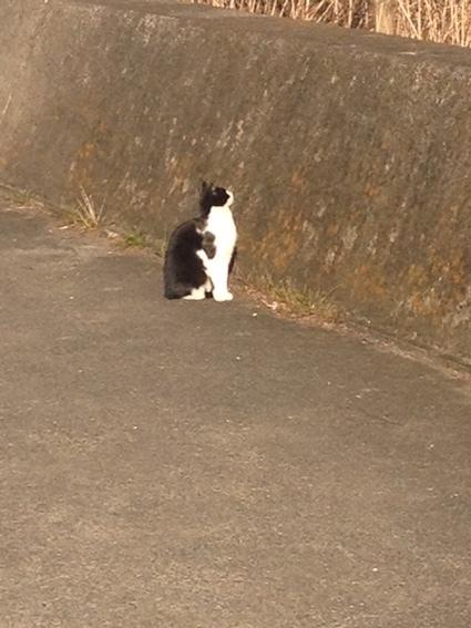 猫と会う_c0200314_16464485.jpg