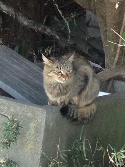 猫と会う_c0200314_16470638.jpg