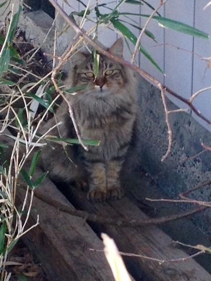 猫と会う_c0200314_16471689.jpg