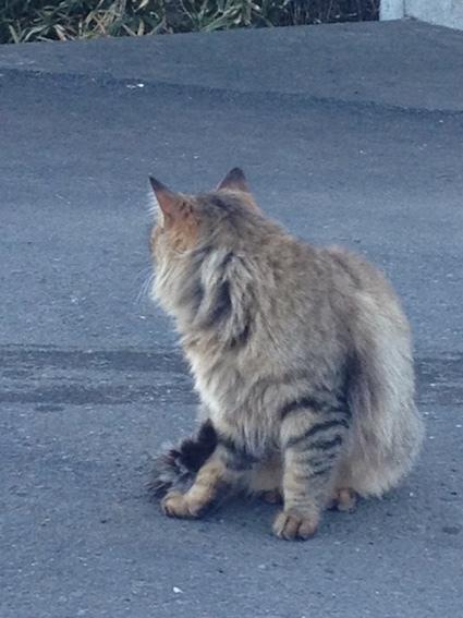 猫と会う_c0200314_16472991.jpg