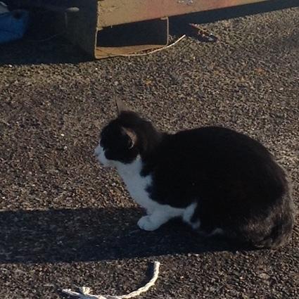 猫と会う_c0200314_16474064.jpg