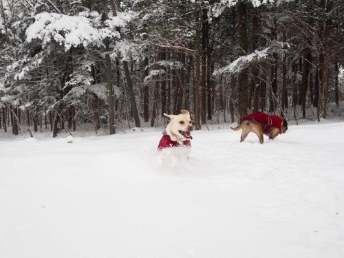 雪を楽しんでます_e0192217_20024630.jpg