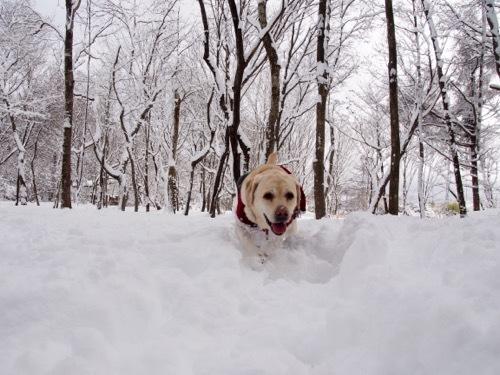 雪を楽しんでます_e0192217_20024707.jpg