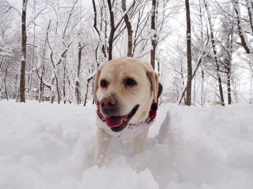 雪を楽しんでます_e0192217_20024765.jpg