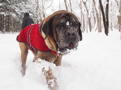 雪を楽しんでます_e0192217_20024795.jpg
