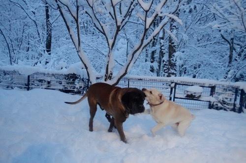 雪を楽しんでます_e0192217_20034627.jpg