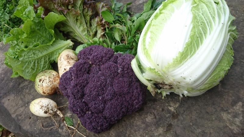 さっきの野菜の、晩御飯_a0125419_17133568.jpg