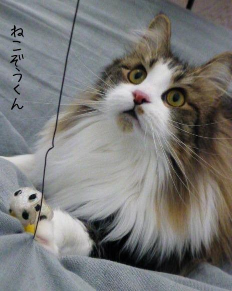 お留守番にゃんこギャラリー【December-2】_e0237625_151922100.jpg
