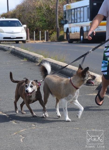 犬の遺伝について_c0099133_10144522.jpg