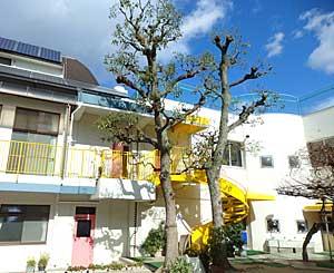 木々もお散髪…_e0325335_8233336.jpg