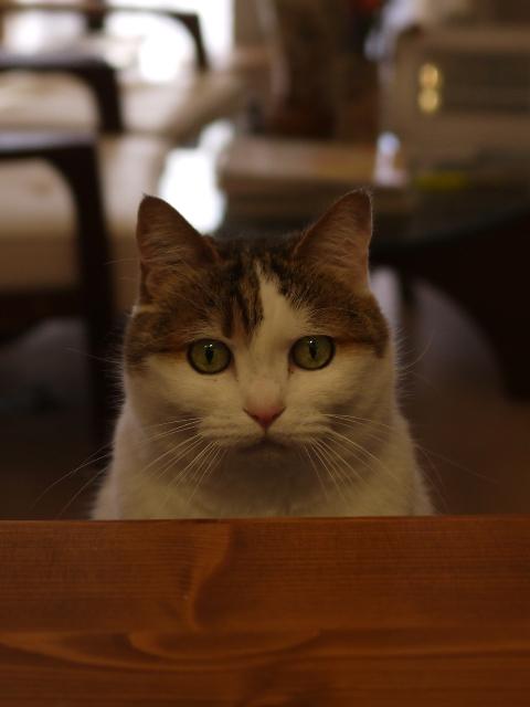 猫のお留守番 さくらちゃん編。_a0143140_173251100.jpg