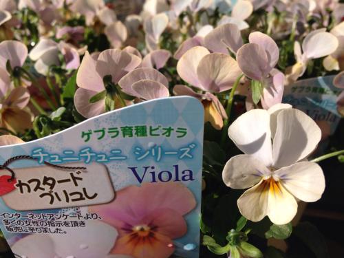 ビオラ・カスタードブリュレ他_b0239952_12305006.jpg