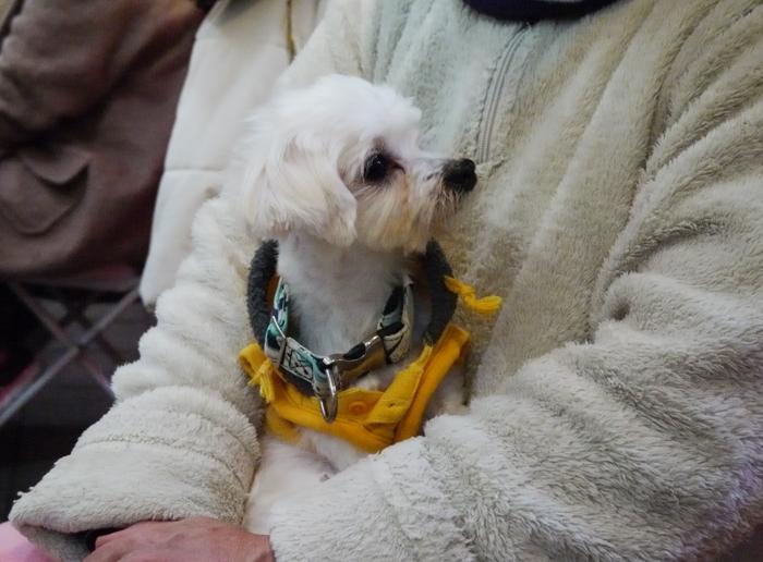 2017年 初マーケット で出あった犬や猫_b0093754_19214539.jpg