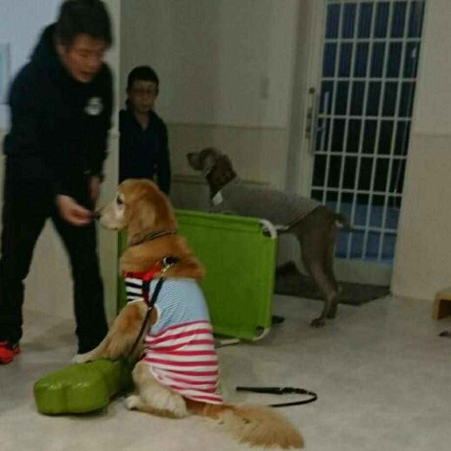 第2回 バランスボール(犬)教室開催_d0256356_16065013.jpg