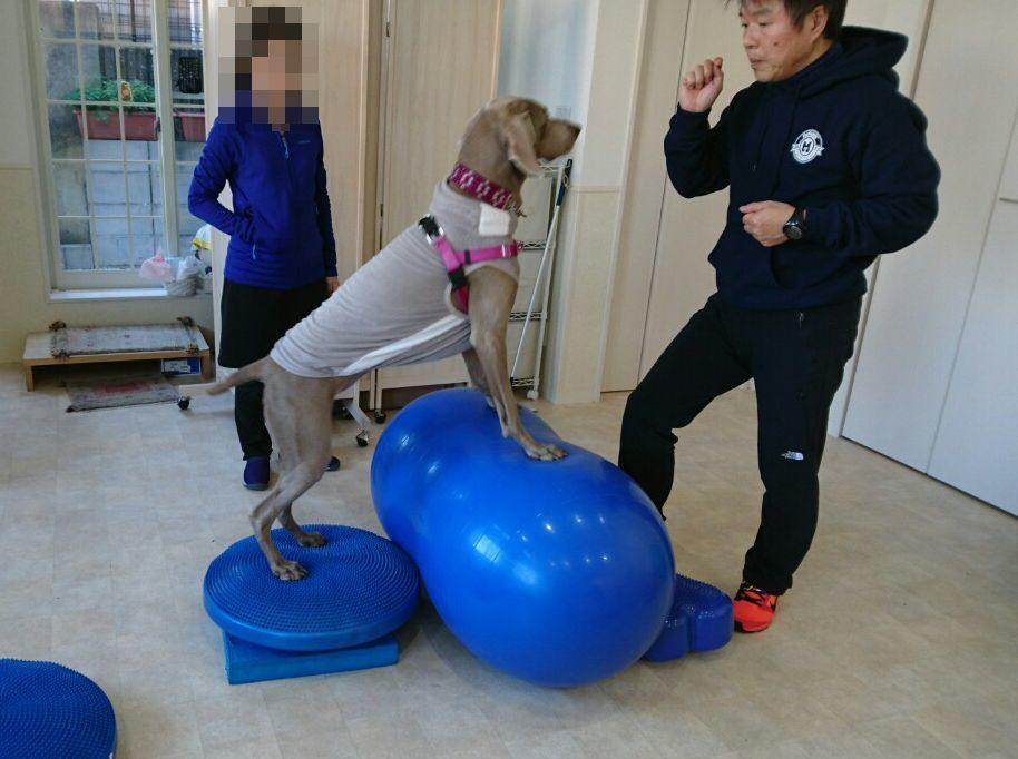 第2回 バランスボール(犬)教室開催_d0256356_16065583.jpg