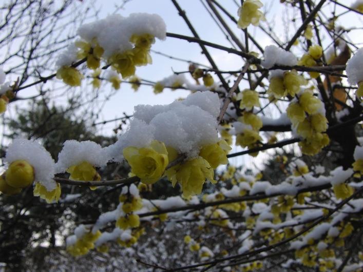今朝も寒かった_c0065260_19293428.jpg