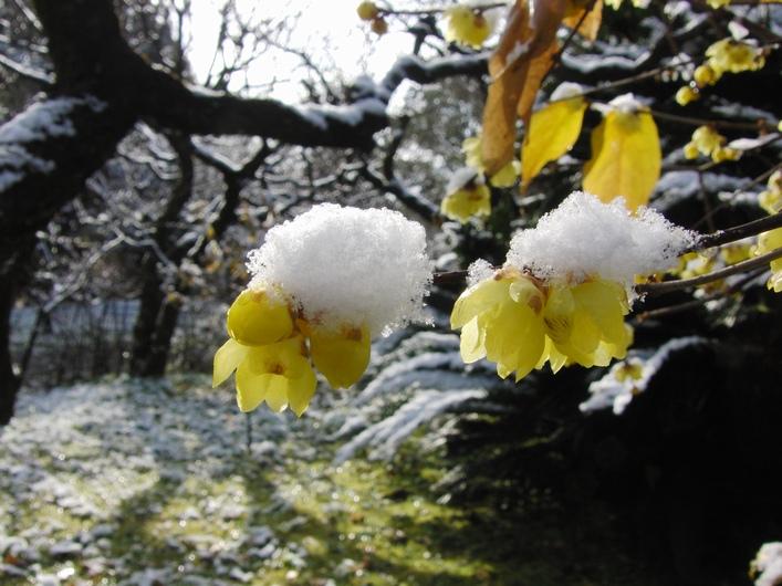 今朝も寒かった_c0065260_19295886.jpg