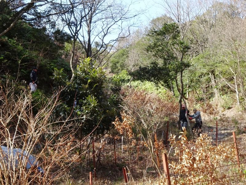 クヌギ谷の伐採・・・孝子の森  by  (TATE-misaki)_c0108460_20425892.jpg