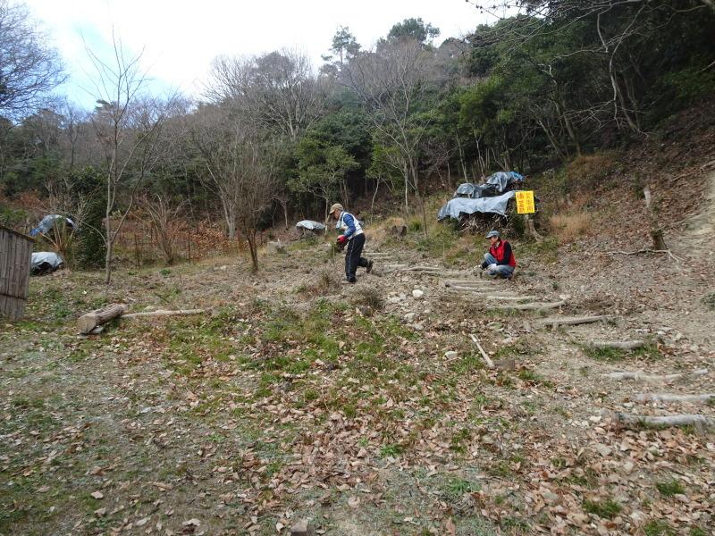 クヌギ谷の伐採・・・孝子の森  by  (TATE-misaki)_c0108460_20443665.jpg