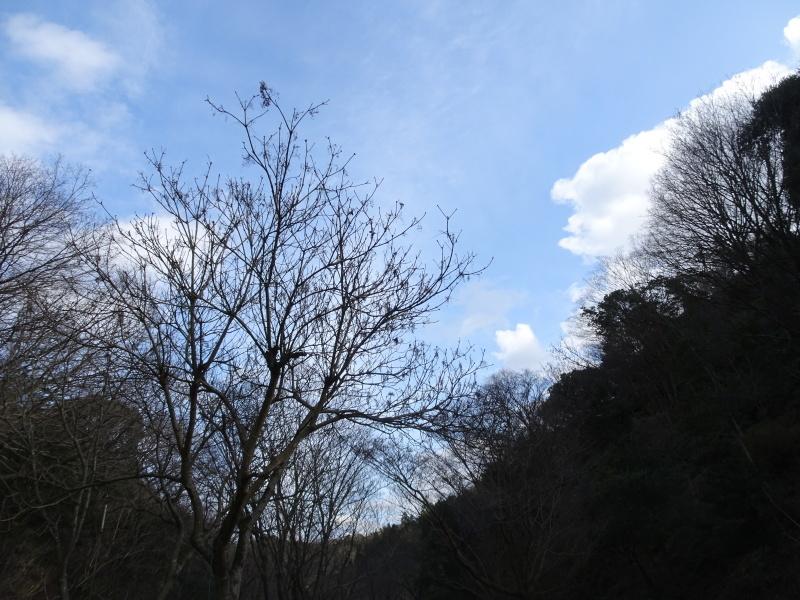 クヌギ谷の伐採・・・孝子の森  by  (TATE-misaki)_c0108460_20451243.jpg