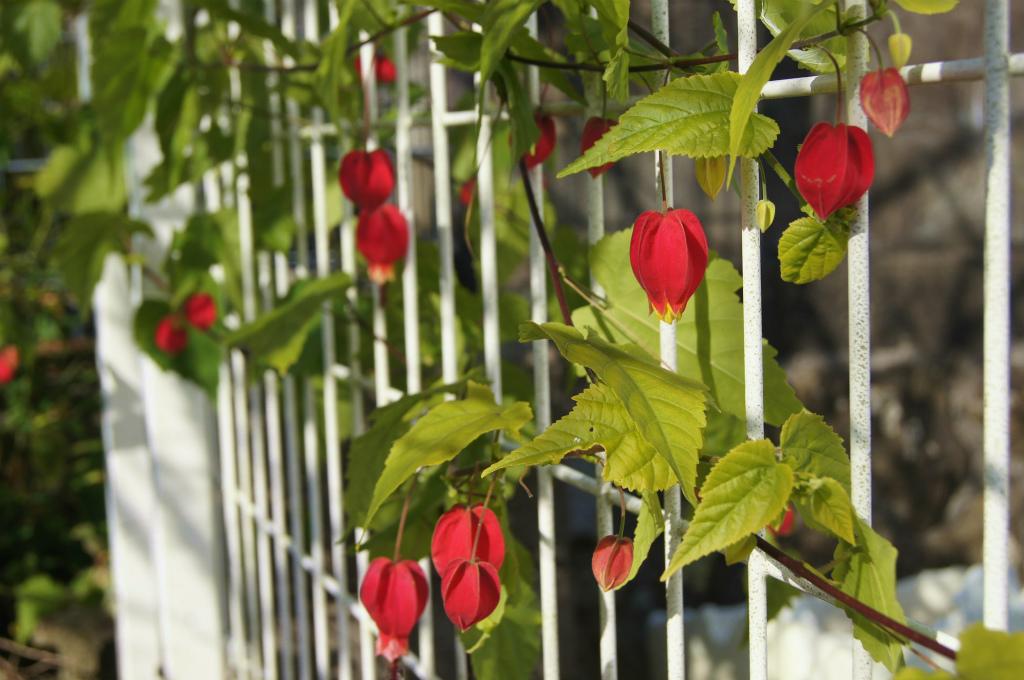 赤い花_e0181373_2003650.jpg