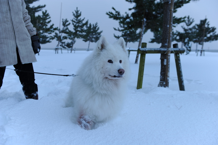 豪雪キャンプ♪ 2_a0049296_1942988.jpg