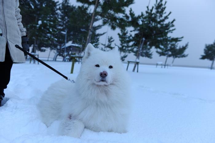 豪雪キャンプ♪ 2_a0049296_1945387.jpg