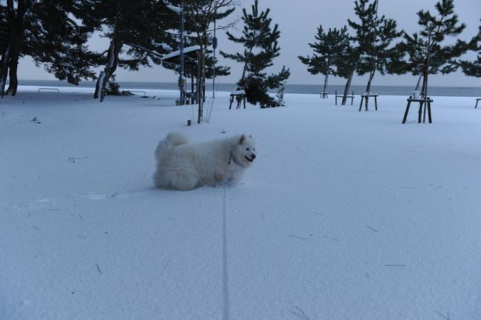 豪雪キャンプ♪ 2_a0049296_194948.jpg