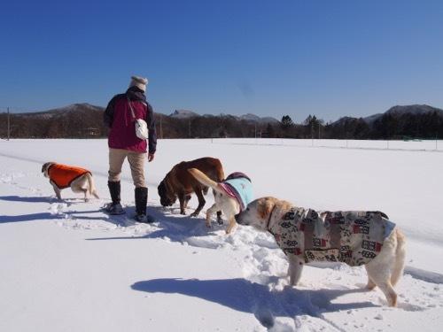 感動した雪上散歩です_e0192217_14484616.jpg