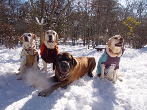 感動した雪上散歩です_e0192217_14485123.jpg