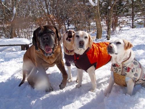 感動した雪上散歩です_e0192217_14485484.jpg