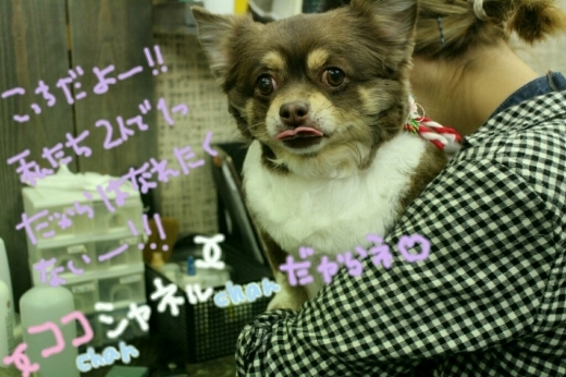 ドラマ_b0130018_00173134.jpg